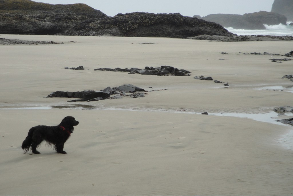 Nellie on the Beach, Just Before the Fire