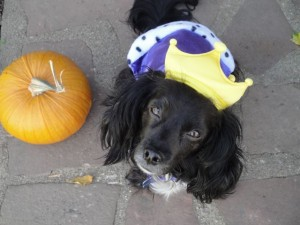 Princess Nellie the Dog with Pumpkin