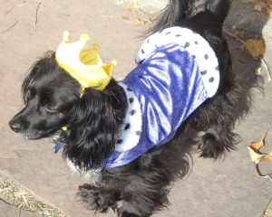 Nellie the Dog in a Princess Costume