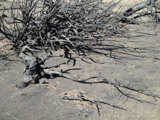 A Burned Tree on My Land